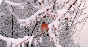 Лунный календарь стрижки ногтей на февраль 2018 года благоприятные дни