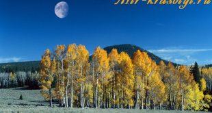 Лунный календарь маникюра на октябрь 2018 года