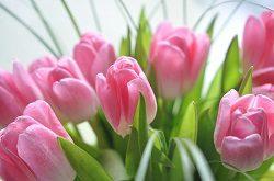 Примите поздравление с 8 марта!